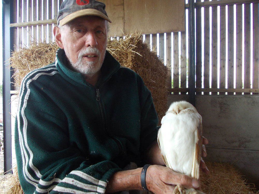Photo of male Barn Owl
